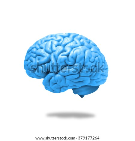human brain isolated and white background