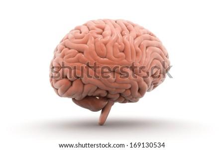 Human Brain isolated on white background - stock photo
