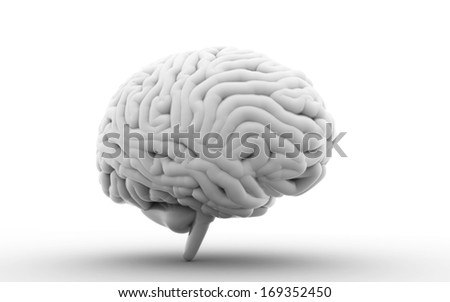Human Brain isolated on white background