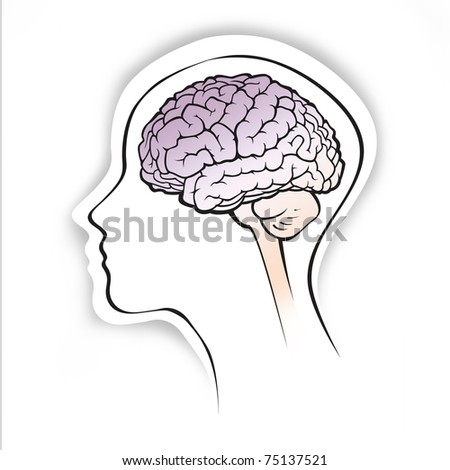 human brain medical schematic simplified illustration on white