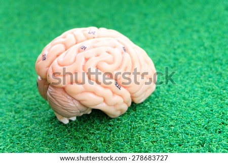 human brain model on green grass background