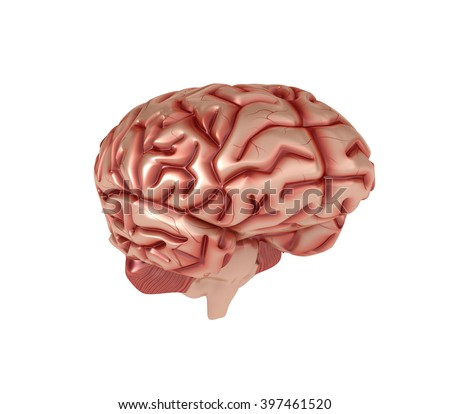 Human Brain on White Background - High Quality 3D Render   - stock photo