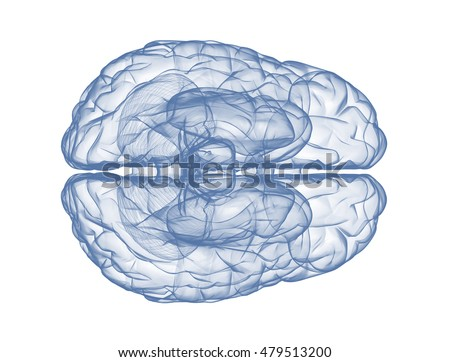 Human brain top view isolated on white background. 3d render