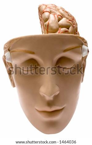 Human Brain w/ Path (Front View) - stock photo
