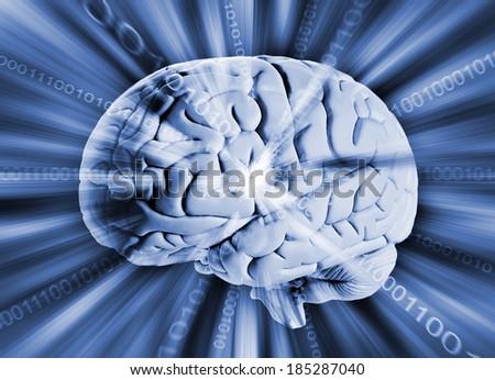Human brain with binary code   - stock photo