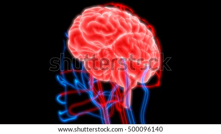 Human Brain with Circulatory System. 3D