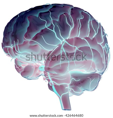 Human Brain with Nerves Anatomy. 3D - stock photo