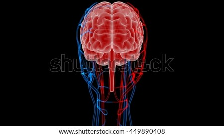 Human Brain with Nerves, Veins and Arteries Anatomy. 3D