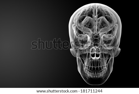 Human brain X ray - front view - stock photo