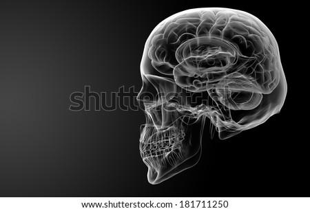 Human brain X ray - side view - stock photo