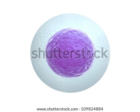 Human egg cell isolated on white background - stock photo