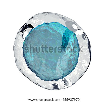 human egg cell isolated on white, 3d illustration - stock photo