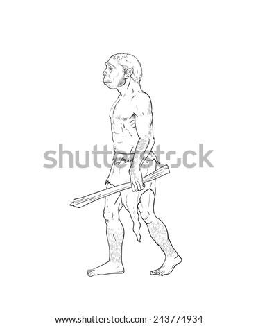 Human evolution digital  illustration, homo erectus, australopithecus, homo habilis, neanderthal, cromagnon - stock photo