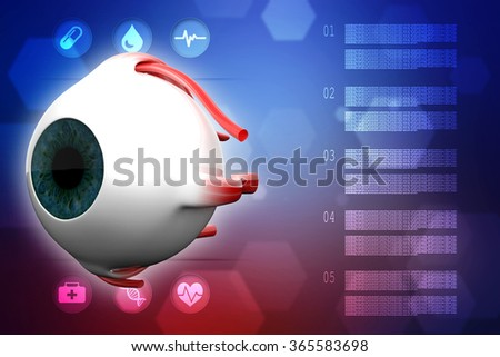 Human Eye Dissection Anatomy - stock photo