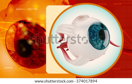 Human eye structure - stock photo