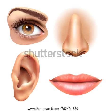Eye diagram human face diy wiring diagrams human face parts 4 sense organs stock illustration 762404680 rh shutterstock com human eye diagram unlabeled diagram of the human nose ccuart Gallery