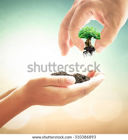 Human hand adding a big plant into soil in another hands on blurred beautiful sunset background. Ecology concept. Healthcare concept. Creation concept.