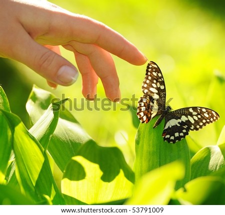 Human hand and beautiful butterfly - stock photo