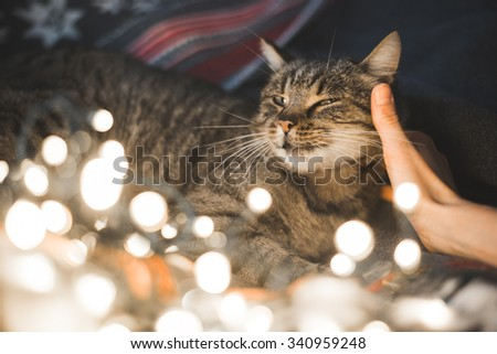 Human hand caresses cute cat head. Christmas lights in the foreground. - stock photo