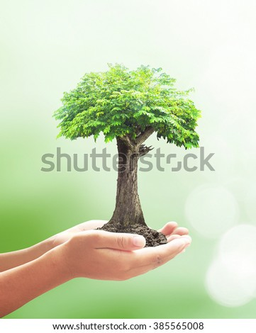 Human hand hold big plant. Soil Blur Abstract Beauty Sea Ocean Forest Desert Colorful Bio Ecology CSR Life Arbor Spring Kidney Idea Assured Food Trust Healthy Brain Wealth Enrich Wisdom Save System - stock photo