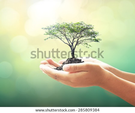 Human hand hold big tree on blur abstract beautiful forest sunset background. Ecology World Environment Day Food Preserve Wisdom Spring Soil CSR Go Green Brain Bokeh Desert Earth Hour Save concept - stock photo