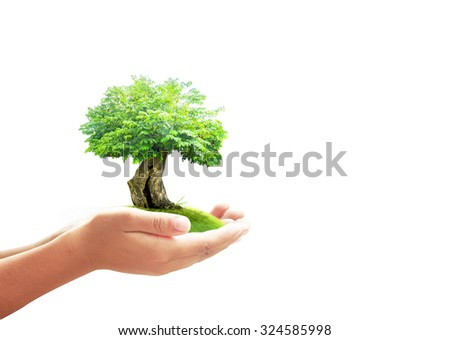 Human hand holding a big tree and beautiful green meadow isolated on white background. Ecology, World Environment Day Alternative Energy Tree of Knowledge LIT Learning Prosper Education CSR concept. - stock photo