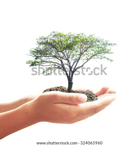 Human hand holding big beautiful plant with soil isolated on white background. Ecology, World Environment Day, Soils a solid ground for life, Ecological, Alternative Energy, Tree of Knowledge concept. - stock photo