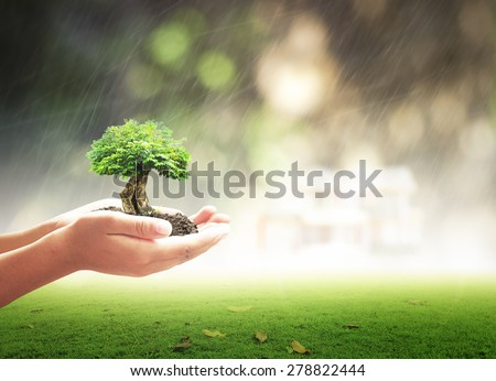 Human hand holding big plant with soil over blur bokeh beautiful house on heavy rain,  abstract sunset nature background. Ecology, Biological City, World Environment, Services, Insurance, LIT concept. - stock photo