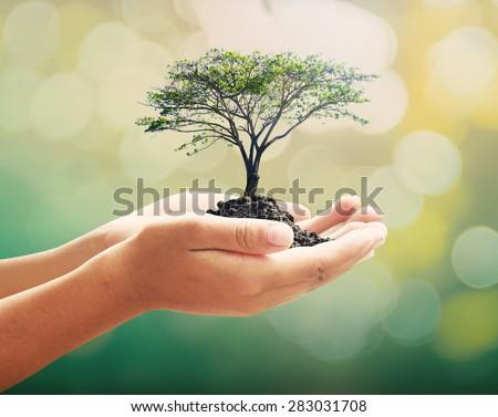 Human hand holding big tree. Forest Learning Wisdom Arbor CSR Trust Attitude Student Notion Insight School Genius Faculty Coaching Oceanic Lab Investor Healthy Career Doctrine Judgement Thinking - stock photo