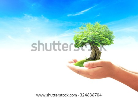 Human hand holding big tree on green meadow over beautiful blue sky background. World Environment Day concept. - stock photo