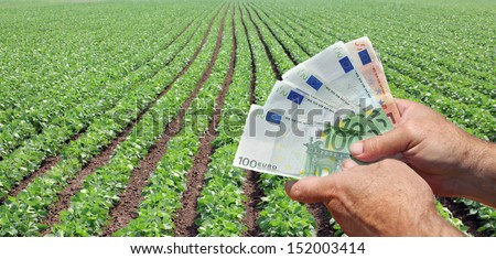 Human hand holding Euro banknote with green cultivated soy field in background - stock photo