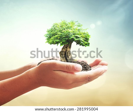Human hand holding medium green plant with soil on blurred abstract beautiful sea, ocean, green forest, desert over colorful sunset background. Ecology, World Environment, Tree of Knowledge concept. - stock photo