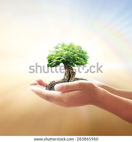 Human hand holding medium plant with soil on blurred abstract beautiful sea, ocean, green forest, desert over colorful rainbow sunset background. Ecology, Environment, Love Tree, Investment concept. - stock photo