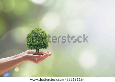 Human hand holding perfect growing tree planting on blur natural green background: Reforestation, sustainable eco forest, saving environment, harmony bio living life ecosystem conservation campaign - stock photo