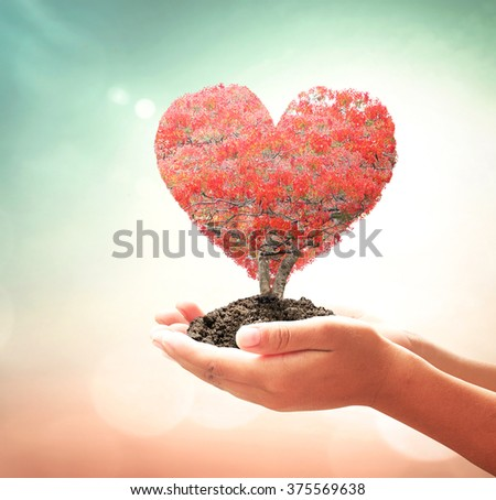 Human hand holding red heart of big tree on blurred sunset background. Happy Valentine's Day Romantic CSR Ecology World Environment Trust Health Care Trust Cure Help Attack illness Patient concept.  - stock photo