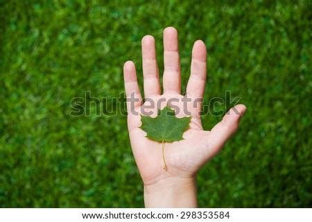 Human hand holding tree leaf close up - stock photo