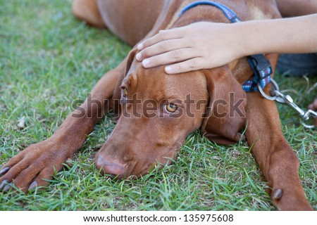 Human hand patting dog head - stock photo