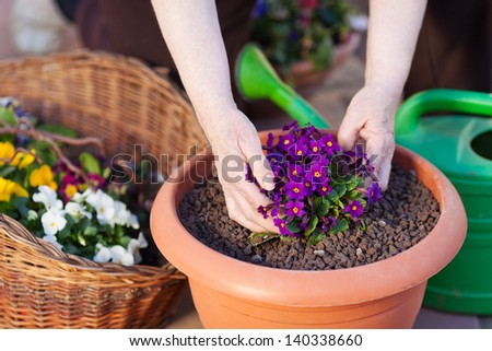Human hand planting a flower in the pot - stock photo