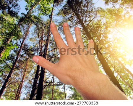 Human hand stretch to the sky in the forest - stock photo