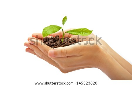 Human hands and young plant - stock photo