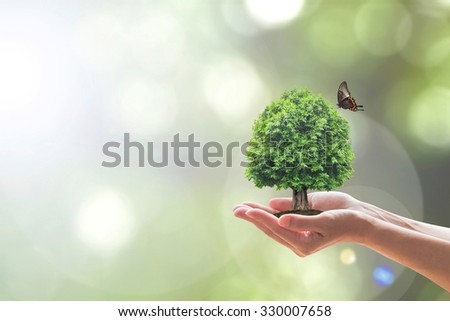 Human hands hold perfect growing tree plant with butterfly on blurred natural background of greenery: Reforestation, sustainable forest, saving environment and harmony ecosystem conservation campaign - stock photo