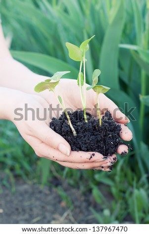 Human hands hold the seedlings to be planted in the ground. - stock photo