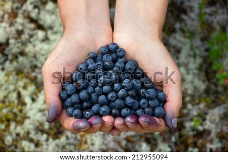 human hands holding a handful of blueberries in the shape of a heart, Russia, Karelia, 2014 - stock photo