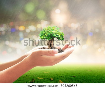 Human hands holding big plant over blurred city on rainy with nature background. Ecology Environmental Services CSR Investment Insurance Agent Trust Beginning Creation Eden Genesis Bio Life concept. - stock photo