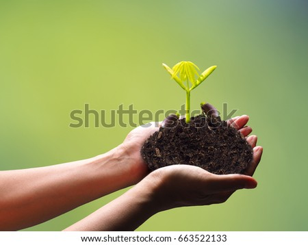 human hands holding fresh seedling on blur background, green sprout for ecology and new life concept
