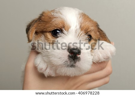 human hands holding funny small cute pet puppy