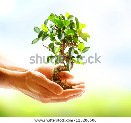 Human Hands Holding Green Plant Over Nature Background. Environment. Ecology Concept - stock photo