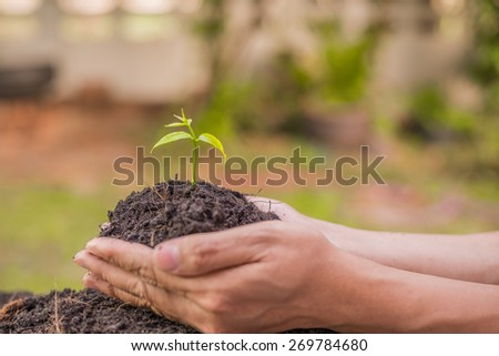 Human hands holding green small plant. - stock photo