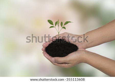 Human hands holding green small plant new life concept. background - stock photo