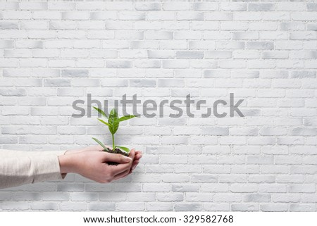 Human hands holding green small plant new life concept over white brick wall background - stock photo